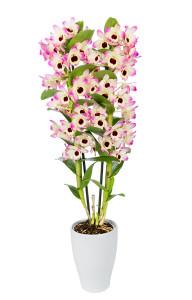 Florallure 70009