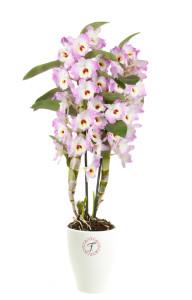 florallure-monoko
