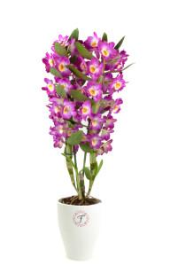 florallure-akatsuki