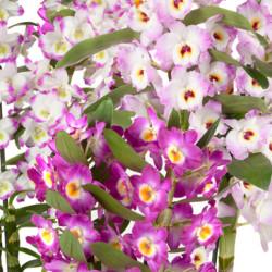 florallure-speciale